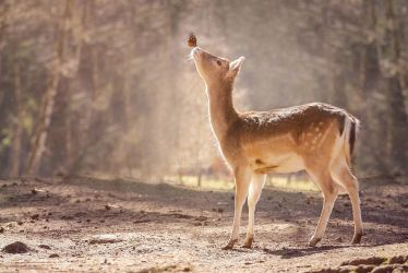 The real bambi by dark-cayden