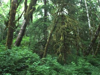 Moss Covered Trees - Forks, WA by RC-ForksWA