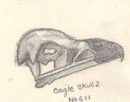 Eagle Skull by Jacked-Sherbert