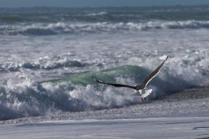 Seagull II by LatchDrom