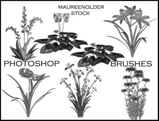 STOCK PHOTOSHOP BRUSHES flower by MaureenOlder