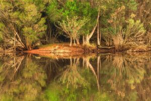 Serendip Reflections by daniellepowell82