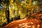 Autumn Forest - Wallpaper by Jassy2012