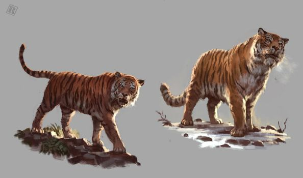 Bengal and Siberian Tiger study by Raph04art