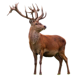unrestricted hq deer 1 by aio350