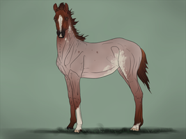 SWS Pashalyk X SEH Colinda - Foal Design by CalyArt