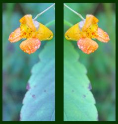 Two Jewels by ezo