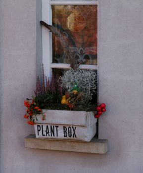 Plant Box by LoveForDetails