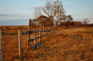 Old fence in field by Tumana-stock