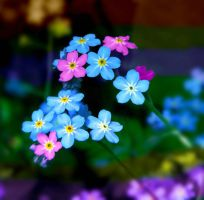 color forget-me-not by Iridescent-happinesS