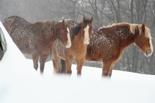Not horsin' around by EJT-Studios
