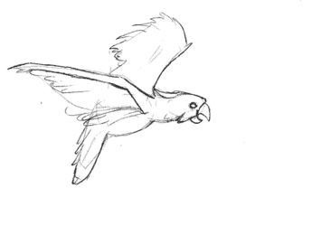 [animated] Parrot movement study by Tempted-Fate