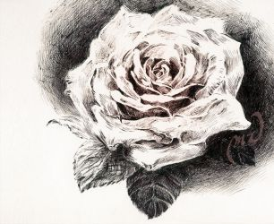 .: Rose in Ink :. by moonlightamber