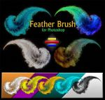 Free Feather Brush #1 by vidka