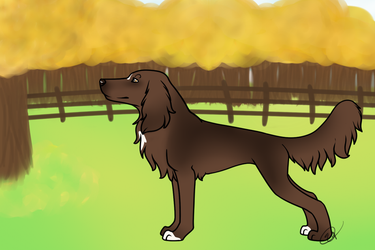 Chili _ Braemoor's 3rd Annual Show by DesertRoseKennel