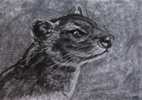 Fossa-ACEO(trade) by Actlikenaturedoes