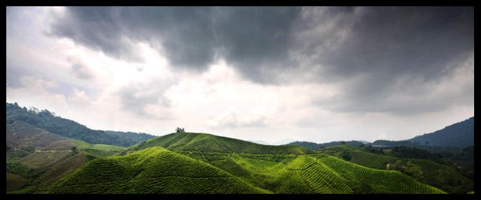 Cameron Highlands by MeltingPoint