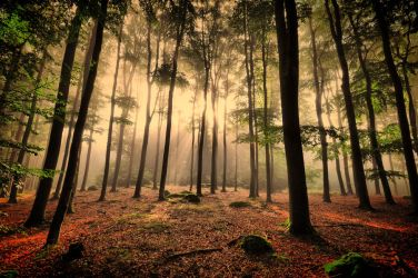 Sunny forest by tomsumartin