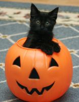 Boo by jennyleighb