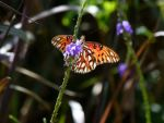 Butterfly by ecfield