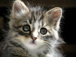 Kitten in the Sun by Readsway2much
