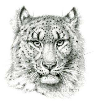 Snow Leopard sketch portrait by sschukina