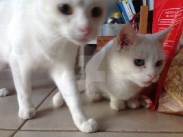 My two cats by jomy10