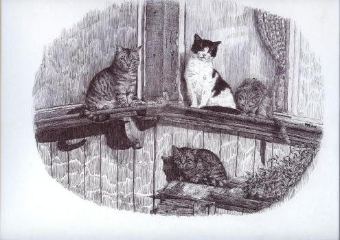 cats by zsuzsu12
