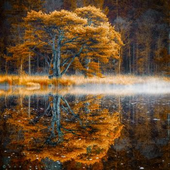 Silent Waters by Oer-Wout