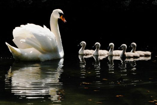 One Parent Family by Earth-Hart