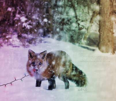 Fox In Snow-christmas by stacybarnes