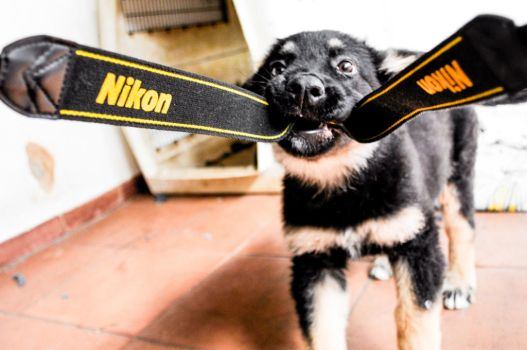 Nikon Dog 2 by pedrocairo