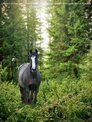 Into the woods by DressageRider4life