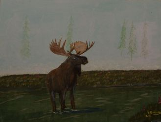 Moose by vic-gomery