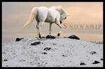 HP: Snowship by chaoticXinsane