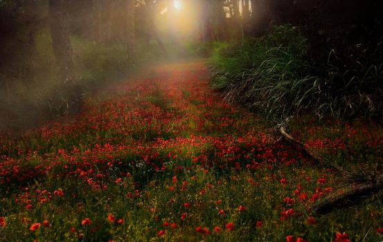 Flower path Background by Jeni-Sue