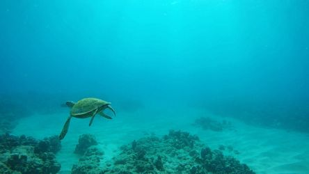 Over the Shoulder Glance Turtle by Raulboy