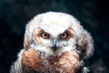 Owly owl VI by WouterPera