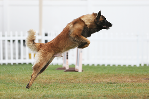 Happy Dog Agility III by Deliquesce-Flux