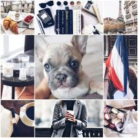 Adopt Moodboard Mystery French Bulldog by Pinkwolfly