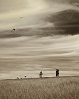 Kites by andy1349