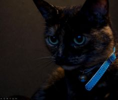 The cat2 by tomdotcomm