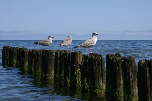 seagull 2 by kasienkaa