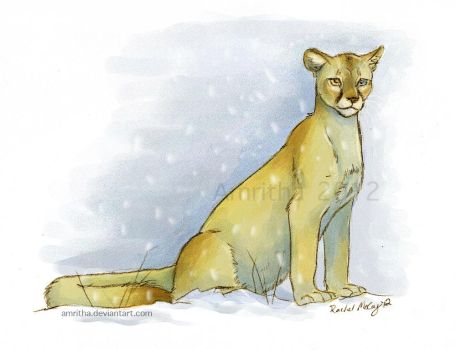 Golden Cougar by Amritha