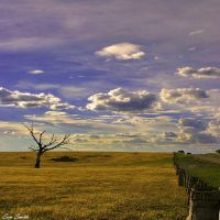 Behind The Boundary Fence by engridearty