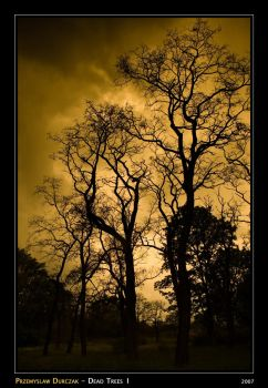 Dead Trees I by Tanthalos