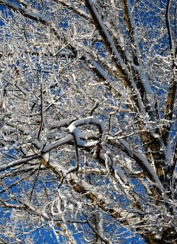 Snowy Oak by VulgarDisplayOfHench