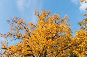 Colors of autumn by marphey