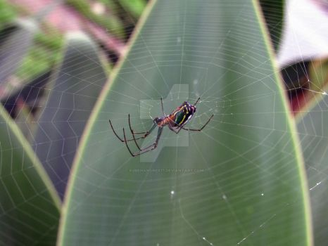 Spider 2 by Rubenandres77