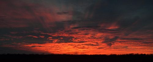 Panorama - Sunset With Geese Flying North by mrh